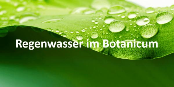 regenwasser-berger-botanischer-garten